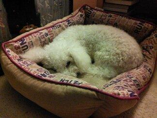 Max, mi perro